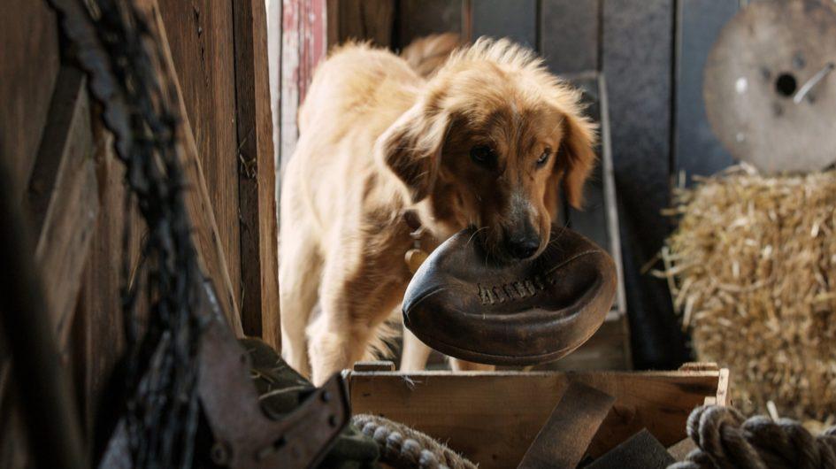 Текст о фильме Лассе Халльстрёма «Собачья жизнь» (A Dog's Purpose, 2017)