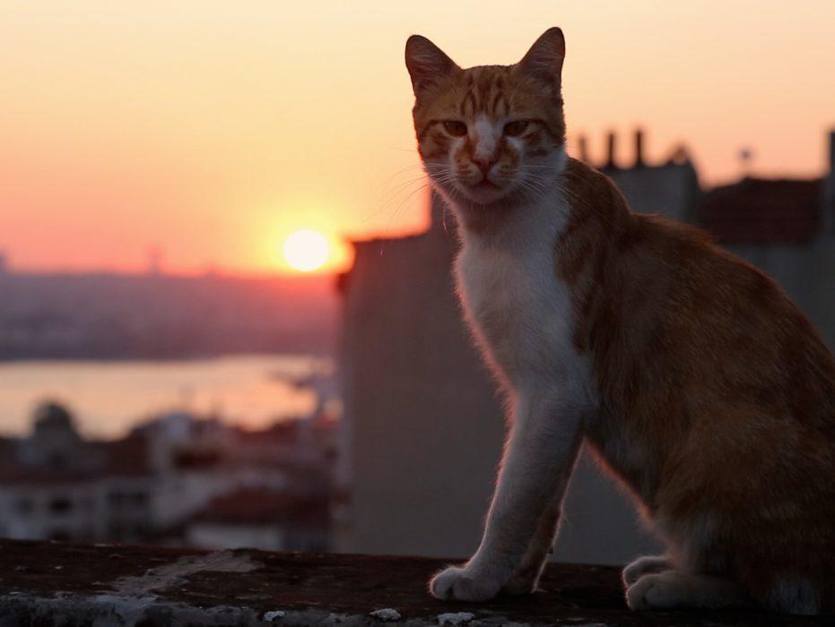 «Город кошек»: о фильме