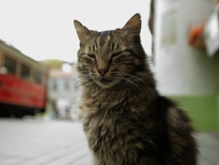 «Город кошек» (Kedi, 2016)