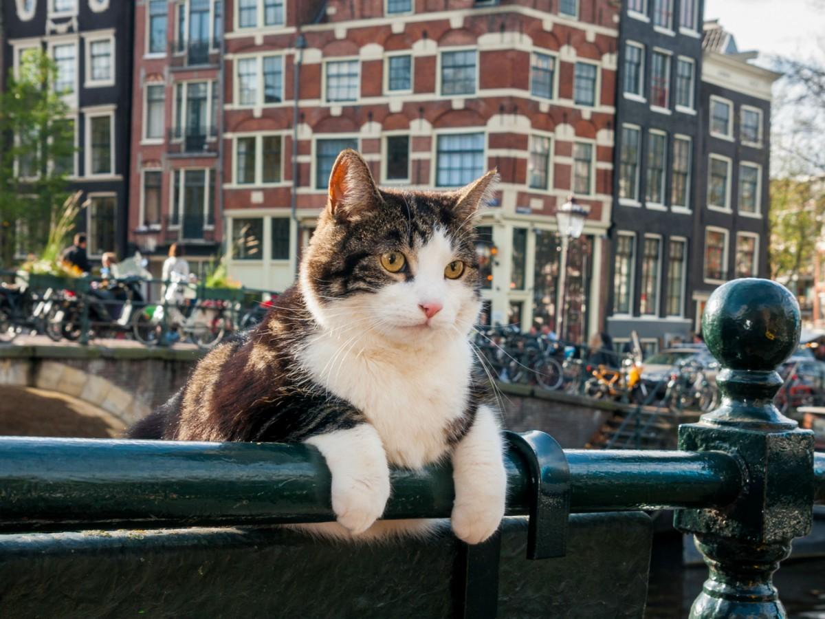 Кадр из фильма «Дикий Амстердам»