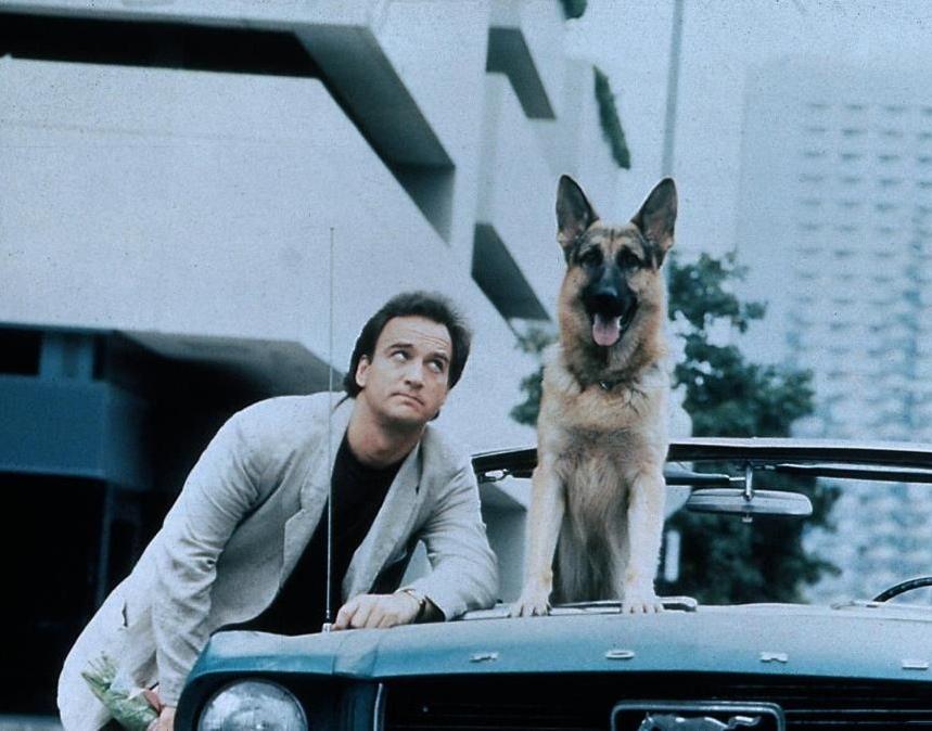 О собаке, за которой охотилась колумбийская мафия, будет снят фильм