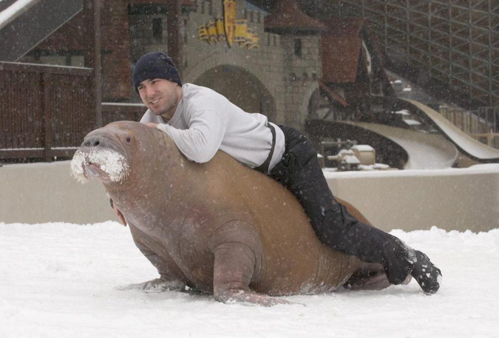 Фильм с Рамзаном Кадыровым проиграл фильму о дрессированном морже на канадском кинофестивале