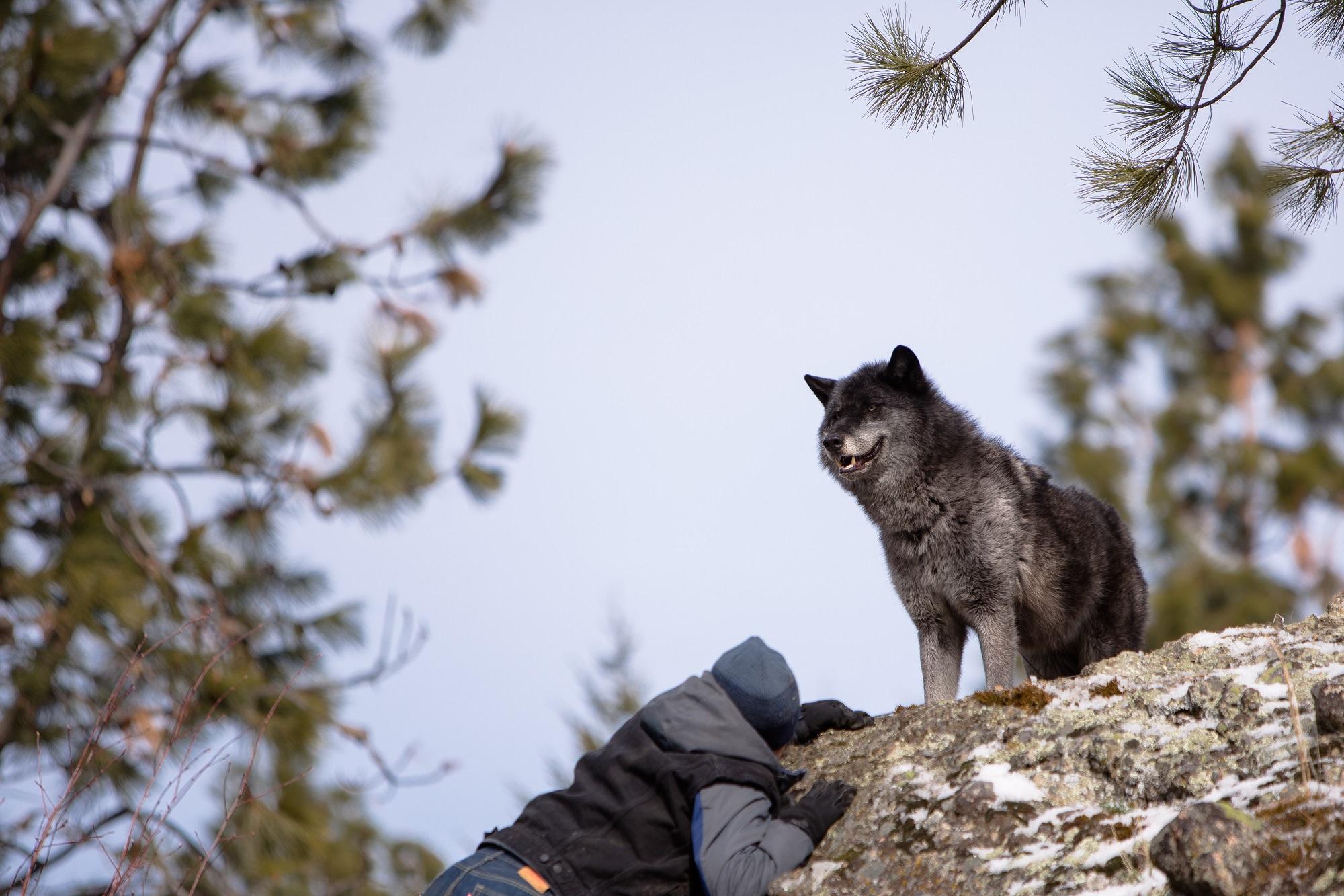 Кадр из фильма «Дочь волка»