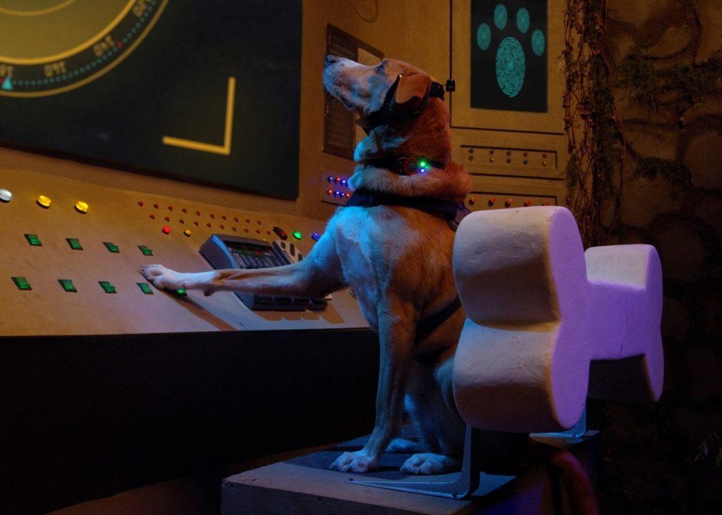 Было много, стал один: в кино выходит «Пёс под прикрытием»